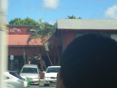 ハワイ画像 472.jpg