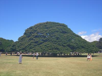 ハワイ画像 487.jpg