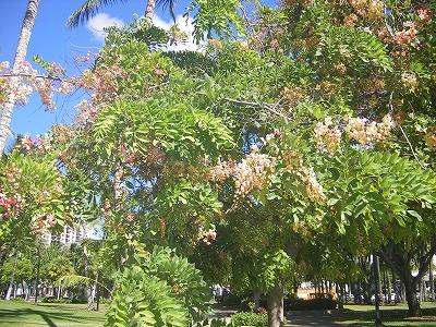 ハワイ画像 508.jpg