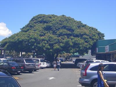 ハワイ画像 572.jpg
