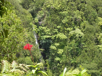 ハワイ画像1 144.jpg