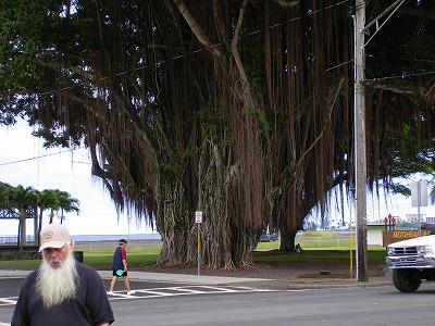 ハワイ画像1 169.jpg
