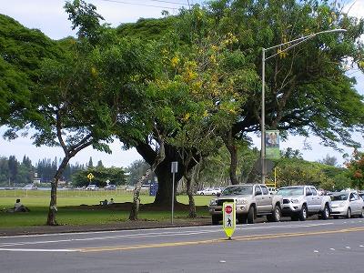 ハワイ画像1 170.jpg
