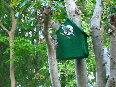 小鳥の巣 155.jpg