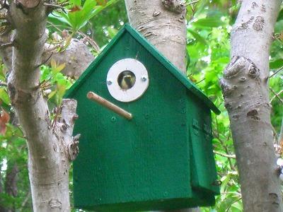 小鳥の巣 244.jpg