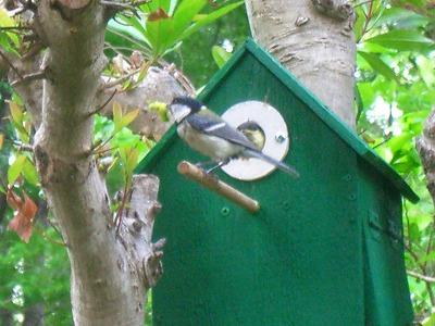 小鳥の巣 254.jpg