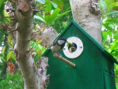 小鳥の巣 255.jpg