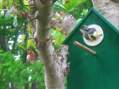 小鳥の巣 258.jpg