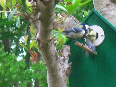 小鳥の巣 260.jpg