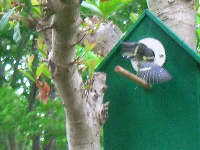 小鳥の巣 261.jpg
