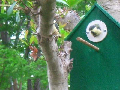 小鳥の巣 264.jpg