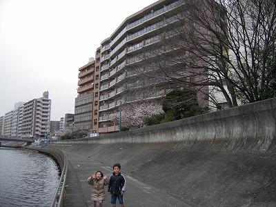 鶴見の桜 005.jpg