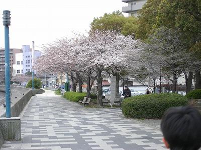 鶴見の桜 009.jpg